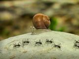 Прикольный мультик про насекомых